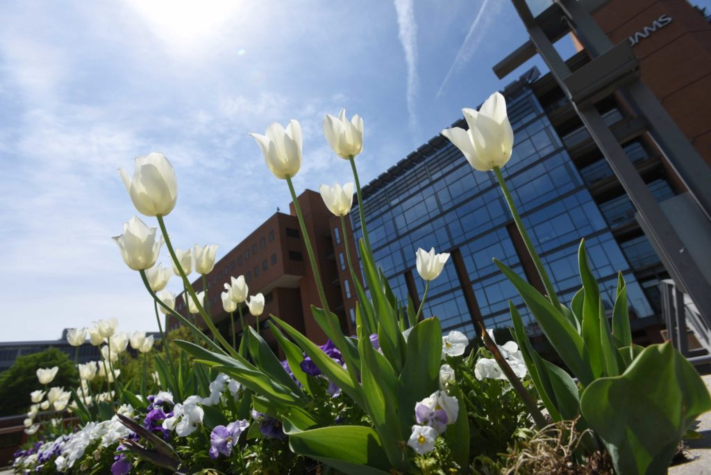 UAMS flowers and building